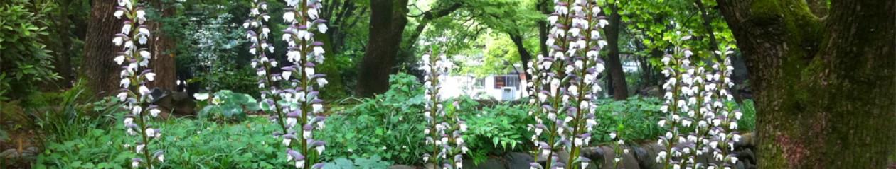 日比谷公園イベント&フェスティバル情報